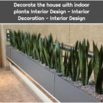 Decorate the house with indoor plants Interior Design - Interior Decoration - Interior Design