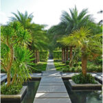 Tropical Walkway With Organized Rows of Bright Palm Trees and Concrete Tile Path Leading Over Yard and Shallow Pond