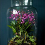 Terrariums: ideal for the interior of the home