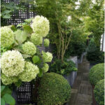 Hydrangeas, Topiary And Boxwood In The Modern Country Garden