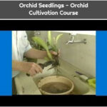 Orchid Seedlings - Orchid Cultivation Course