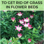 5 Natural Ways to Get Rid of Grass in Flower Beds