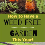 How to Have a Weed-Free Garden This Year